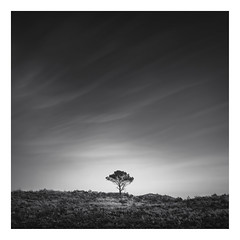 Loneliness (Marco Maljaars) Tags: longexposure dutch le blackandwhite marcomaljaars monochrome minimalism sky mood landscape light bw netherlands silence wood tree dune dunes