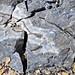 Agate in chert (Rex Chert Member, Phosphoria Formation, Permian; Astoria Hot Springs roadcut, Teton County, Wyoming, USA) 3