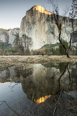 El Capitan - Yosemite National Park (Ray Wise Photography) Tags: cliff reflection water pool face rock sunrise climb el climbing cap granite landscpae capitan park portrait usa sunlight tree vertical america flood bare national yosemite spring