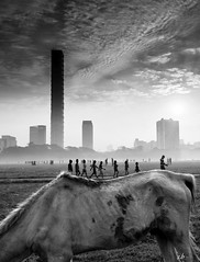 (sharmi_diya06) Tags: street streetphotography streetphot abstract blackandwhite animal people morning nature sky natgeoyourshot natgeophotographer natgeophotographers yourshotnatgeo light shadows shadow