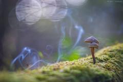 Humareda (sergio estevez) Tags: azul bokeh color campodegibraltar hongo luz macro micologia naturaleza seta verde primotar135mmf35 sergioestevez