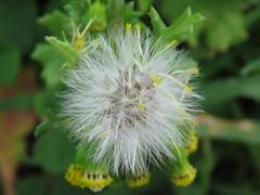 IMG_5742 (jesust793) Tags: flores flowers plantas plants naturaleza nature