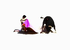 capeando de rodillas (aficion2012) Tags: blohorn jalabert 11 9 2016 manolo vanegas arles artofbullfighting high key corrida francia france provence bullfight novillada novillero novillo torero toro tauromachie tauromaquia taureau feriaduriz capote capa rodillas