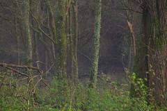 A winter woodland walk Sussex (Adam Swaine) Tags: woodland trees winter naturelovers nature mist flora fungi england english sussex canon green britain uk ukcounties counties countryside westsussex british greatbritain naturereserve beautiful adamswaine 2019 lichen