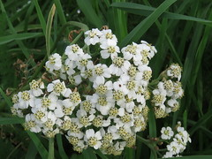 IMG_5738 (jesust793) Tags: flores flowers plantas plants naturaleza nature
