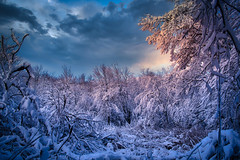 Snowfall Sunset (tciriello) Tags: sunset snow snowscape cold winter weather clouds hudsonvalley warwickny newyorkstate
