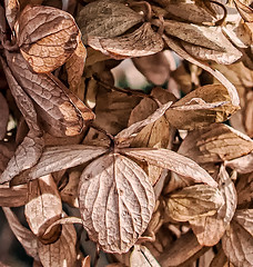 (nrhodesphotos(the_eye_of_the_moment)) Tags: dsc22843001084 wwwflickrcomphotostheeyeofthemoment theeyeofthemoment21gmailcom nature plantlife outdoors macro autumn2019 season leaves colors colorsofautumn flower texture pattern