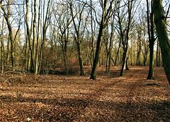 Revier Buch Herbst 2019 (Forstamt Pankow / Berliner Forsten) Tags: revierbuch forstamtpankow berlinerforsten herbst2019 bäume sträucher himmel berlin brandenburg deutschland wald