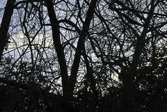 winter (zazaginz) Tags: bluesky windy cold blacktwigs sky branches bare tree