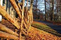 On the outside (E. K. Andréasson Photo) Tags: ontheoutside outside fence woodfence wood traditional park sun autumn fall leaves slottsskogen göteborg gothenburg sweden