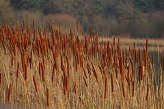 Winter's Nature (Adam Swaine) Tags: adamswaine winter naturelovers nature naturereserve flora canon england english mist britain british uk ukcounties counties countryside sussex lakes beautiful