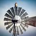 hawk windmill003