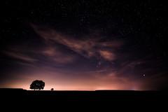 Bonne nuit ! -- Good night! (olivier_kassel) Tags: nuit night étoiles stars ciel sky nuages clouds paysage landscape arbres trees