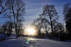 The setting sun (DameBoudicca) Tags: sweden sverige schweden suecia suède svezia スウェーデン uppsala snow snö schnee nieve neige neve 雪 winter vinter hiver inverno invierno 冬 sunset solnedgång sonnenuntergang ocaso coucherdesoleil tramonto 日没