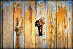 Mystérieuse et ancienne clé sur une porte à la peinture bleue écaillée (bleumarie) Tags: étang étangdesalses 7décembre2019 automne2019 décembre2019 espacenaturel espacepréservé espaceprotégé mariebousquet natura2000 nikond90 sainthippolytedelasalanque suddelafrance 2019 automne bleumarie catalogne décembre eau france languedocroussillon méridional midi nature nikon occitanie paysage promenade pyrénéesorientales roussillon sainthippolyte sud