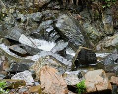 Bukovska River (Nenad Andonovski) Tags: srbija srbijauslikama outdoors nature naturephotography maljen podbukovlje river rocks stones