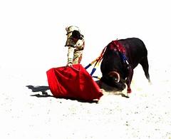 bon courage Manolo ! (aficion2012) Tags: blohorn jalabert 11 9 2016 manolo vanegas arles artofbullfighting high key corrida francia france provence bullfight novillada novillero novillo torero toro tauromachie tauromaquia taureau feriaduriz muleta muletazos