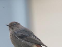 IMG_6451 (jesust793) Tags: pájaros birds naturaleza nature