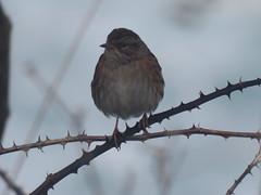 IMG_6419 (jesust793) Tags: pájaros birds naturaleza nature
