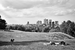 A kiss (JMZ Photos) Tags: nikon nikkor d700 50mm f14 greenwich park london canary wharf view hill kiss tree city skyline sky bw black white outside streetphoto