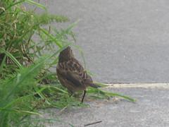 IMG_6323 (jesust793) Tags: pájaros birds naturaleza nature