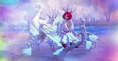 Swans (Selen inworld) Tags: swan geese goose duck white winter magic luane redhair avatar genus maitreya mesh sl second life fairy bento
