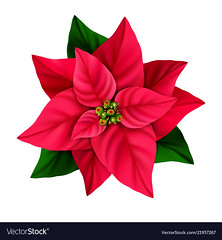 Christmas star decorative poinsettia flower isolated on a white background. (nancyjnoll) Tags: poinsettia red flower isolated white holiday illustration plant traditional christmas decoration newyear floral symbol nature season decorative flora object blossom design green winter leaf star single element greeting scarlet icon xmas bright natural seasonal gift new year whitebackground december beautiful graphic happy tradition decor leaves petal art merry noel style