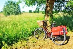 Rower damski - jaką damkę wybrać i kupić? TOP 10 rowerów dla kobiet w 2019! (KatarzynaZ) Tags: 2016 2017 2018 2019 dobryrowerdamski jakądamkęwybrać jakirowerdlakobiety rankingrowerówdamskich2015