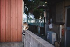 猫 (fumi*23) Tags: ilce7rm3 sony street alley cat chat gato cosina katze neko 58mm nokton voigtlander voigtländernokton58mmf14slⅱ fmount feline a7r3 animal manualfocus ねこ 猫 ソニー コシナ ノクトン フォクトレンダー 路地