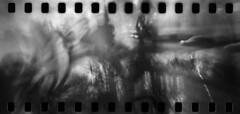 2590 On The Move. (Monobod 1) Tags: ondu 135 panoramic ilford fp4 kodak hc110 pinhole lensless epsonv800