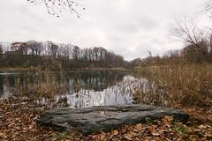 O a k l a n d L a k e (0sire) Tags: fall autumn lake park trees rocks overcast cloudy oaklandlakepark queens nyc newyorkcity