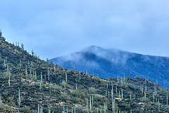 12092019000036992 (Verde River) Tags: landscape landscapes nature cactus bird birds