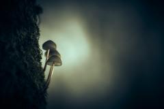 Faint Light (micke.vmix) Tags: carlzeiss zeiss aposonnart2135 sonnar135f2zf d850 mushroom
