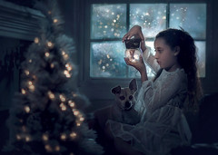 Snow Globe ({jessica drossin}) Tags: jessicadrossin christmas tree lights holiday wwwjessicadrossincom portrait blue cold winter indoors window snow globe dog pet