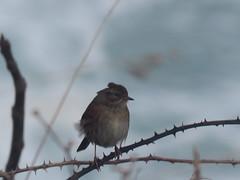 IMG_6413 (jesust793) Tags: pájaros birds naturaleza nature