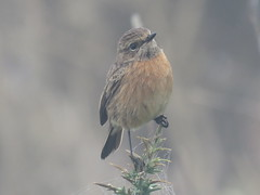IMG_6293 (jesust793) Tags: pájaros birds naturaleza nature