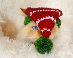 This is getting ridiculous ! (FocusPocus Photography) Tags: tofu dragon mütze hat elf weihnachten christmas tier animal