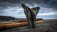 Beach Whale Tail (Paul Rioux) Tags: beach shore driftwood logs whale tail sand clouds random prioux
