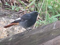 IMG_6434 (jesust793) Tags: pájaros birds naturaleza nature