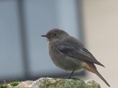 IMG_6457 (jesust793) Tags: pájaros birds naturaleza nature