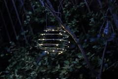 70D_IMG_4190 (jonh8852) Tags: garden light