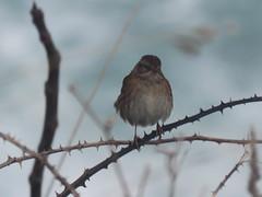 IMG_6415 (jesust793) Tags: pájaros birds naturaleza nature