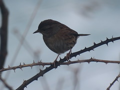 IMG_6418 (jesust793) Tags: pájaros birds naturaleza nature