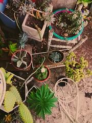 Camuflash (florencia.cian) Tags: plantas plant weed green verde cactus colors spring primavera buenosaires argentina suculentas garden jardin colores corner rincon