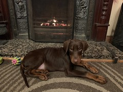 Little Kaiser Sitting In Front Of The Fire (firehouse.ie) Tags: