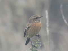 IMG_6306 (jesust793) Tags: pájaros birds naturaleza nature