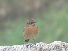 IMG_6311 (jesust793) Tags: pájaros birds naturaleza nature