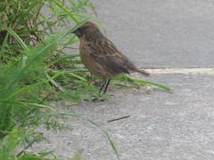 IMG_6322 (jesust793) Tags: pájaros birds naturaleza nature