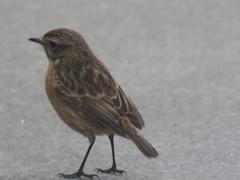 IMG_6324 (jesust793) Tags: pájaros birds naturaleza nature