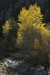 Lite 'er up (Rocky Pix) Tags: liteerup middle fork st vrain river highway morning backlit trees brush wood rock cliff autumn trekking applevalleyanteloperoad denverbotanicgardens pastoral lyons boulder county colorado foothills rockies rockypix rocky mountain pix wmichelkiteley f16 150thsec 27mm 1870mmf3545 nikkor normalzoom monopod